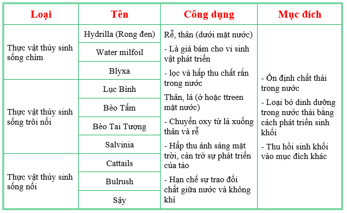 Cac Loai Thuc Vat Thuy Sinh