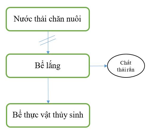 Quy Trinh Xu Ly Nuoc Thai Chan Nuoi Bang Thuc Vat Thuy Sinh